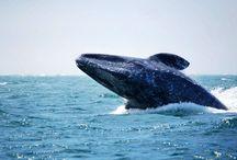 Actividades y paisajes / En Loreto Bay  podrá disfrutar de una amplia variedad de actividades  para todos los gustos