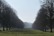 Views and Vistas / The Forde Abbey landscape