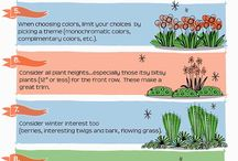 Flowers and plant for garden flower beds