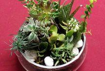 My Garden Creations