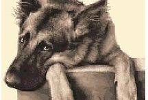 German Shepherds / My favourite breed of dog.