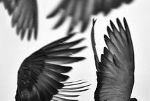 FLY / by Linda Ketelhut