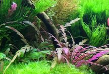 Аквариумы (Aquariums)