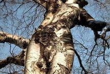 Pohon Unique