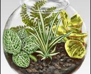 House plant ideas / House plants