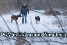 Doberman Health...For Our Breed's Future