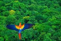 Schöne Regenwaldfotos von anderen