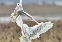 Ptaki / Birds