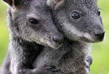 travel=i want to go to australia/new zealand... / by Julie Jones