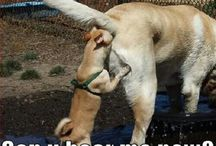 állatság