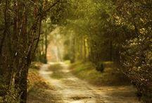 Nature&Landscape