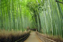 Japan / Travel