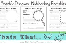 Bugs, Bugs, Bugs and Spiders Theme / Learn about bugs. Find projects to do and artwork to create related to bugs and spiders.