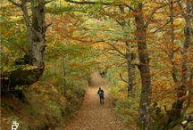 Las Rutas del Parque Natural de Redes - Asturias