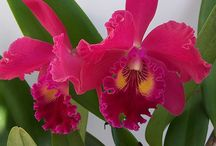 Orchids / Some of our gorgeous orchids! Visit one of our six retail locations to find the right orchid for your home.