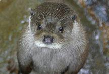 de jolies petites bêtes / Nature ... animale