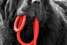 Dogs / by Jacqueline Wertman