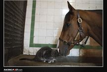 Photo of the Day / A selection of photos which are all avaliable from http://photos.racingpost.com/