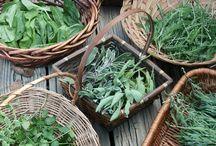 herbs & tea