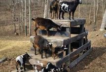 For the Goat Yard