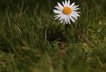 Adoro plantas e flores / Dicas de jardinagem