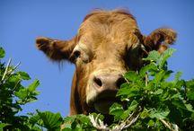Farm Animals / by Agriaffaires