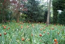 garden ideas / Gardens and land art.