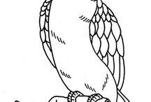 disegno uccelli