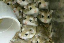 hamster:)