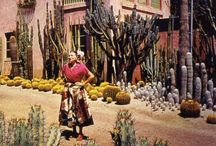 Nature / Cacti