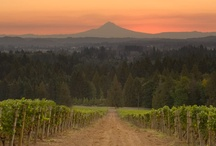 Wineries Near Sherwood, Oregon / by Stacy Owens
