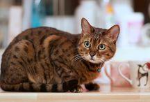 Zachowania społeczne kotów / Wszystko o życiu społecznym kotów
