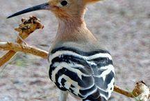 Birds.Ptaszki