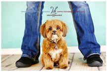 Pet Portraits / Some of my favorite pet portraits!
