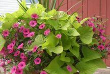 φυτα κηπος