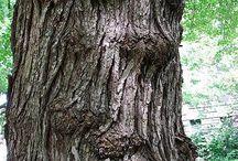 bomen figuren