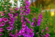 F -- Flowers