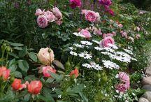 цветники с розами