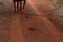 Bago Journeys / Journeys away from Bago Vineyards &  Maze