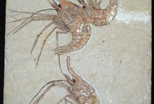Fossils - inspiring nature / Fossils photography and art