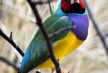 Aves no Geral - Raças e Espécies