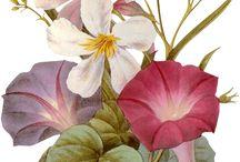Obrazki z kwiatami
