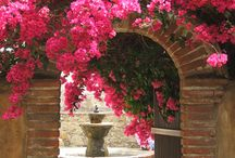 Bougainvillea  Land / by Lorna Lyons