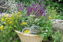 Erdő,mező növényei / Ehető növények
