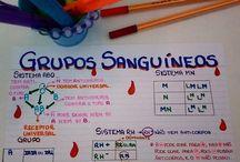 GUIAS DE ESTUDOS