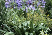 Plantes Jardin / Essence méditerranéennes