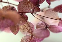 Autumn... Purple and lilac shade...