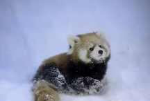 Panda und co
