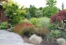 Graminacee ornamentali / Combinazioni possibili di erbe da giardino perenni adatte al sole e all'ombra: colore e interesse 365 giorni all'anno