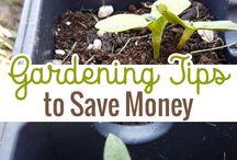 Gardening by Mema / Gardening tips!